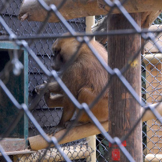 Hampton Chain Link Fencing Provides New Baboon Enclosure