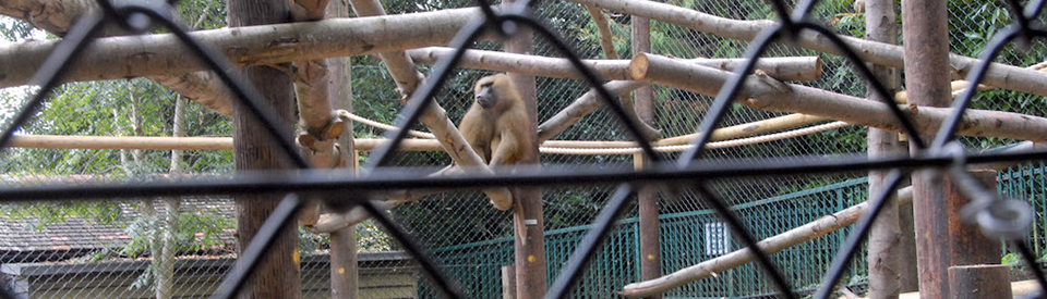 Fencing Solutions for Baboons