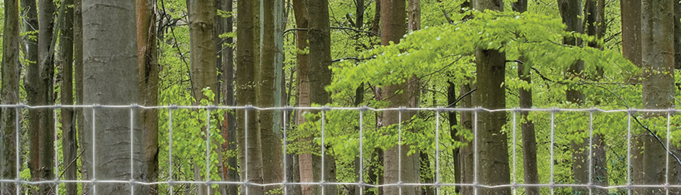 Fencing Solutions for Forestry
