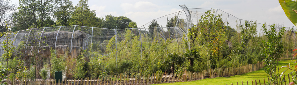 Channel 4 Features State-of-the-art Tiger Enclosure at Chester Zoo