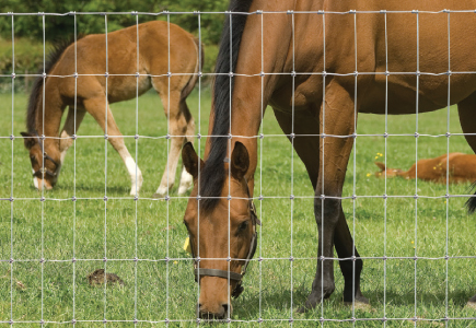 Horses and Foal Fencing