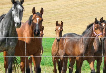 Hinge Joint Horse and Foal Fencing