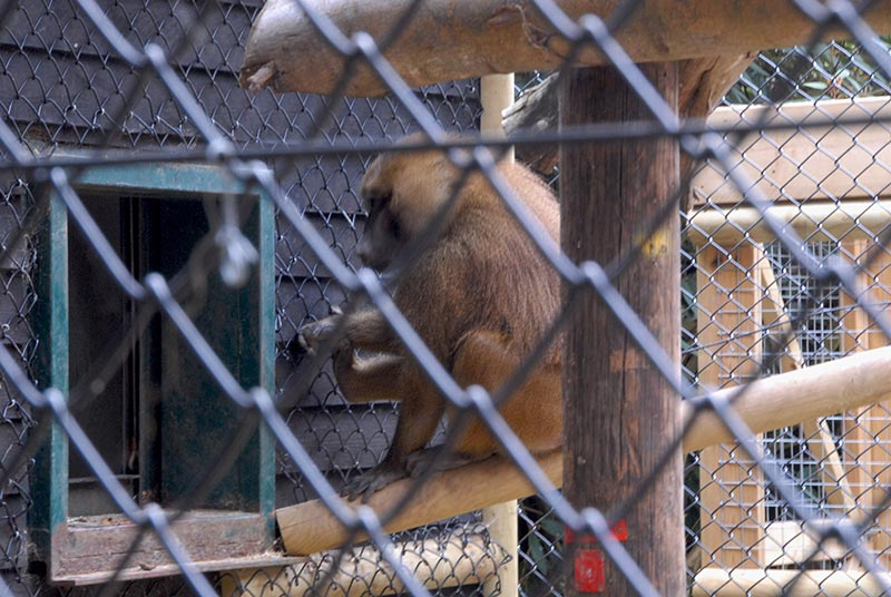 PVC Coated Chain Link Fencing for Baboons