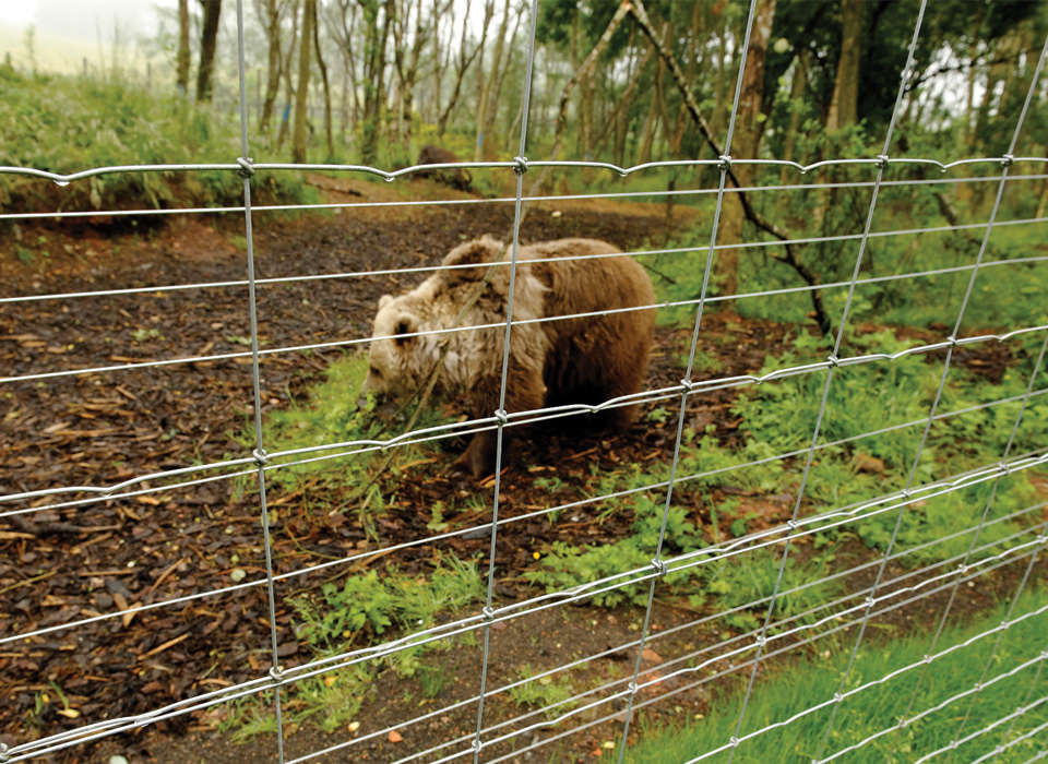 Fencing for Bears