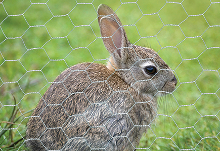 Hexagonal Wire Netting for Rabbits