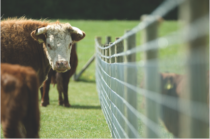 Sentinel Stock and Lamb Fencing