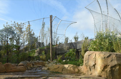 Fencing for Tigers